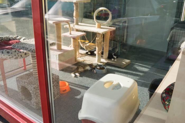 Для того, чтобы кошки чувствовали себя комфортна, в павильоне работает кондиционер . Фото Анастасии Вереск