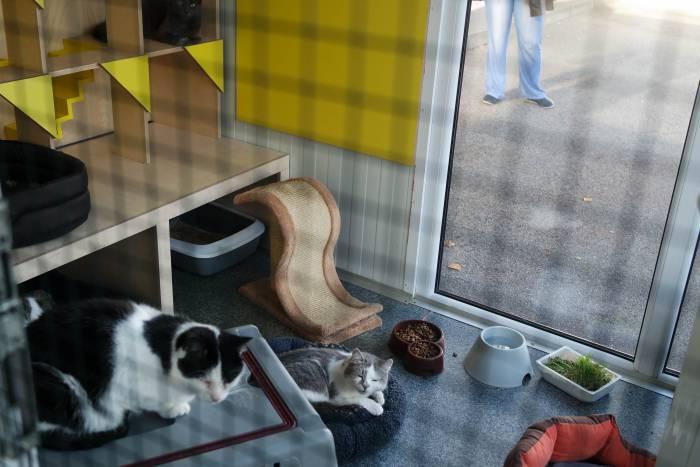 Павильон оборудован мягкими домиками для кошек и игрушками. Фото Анастасии Вереск
