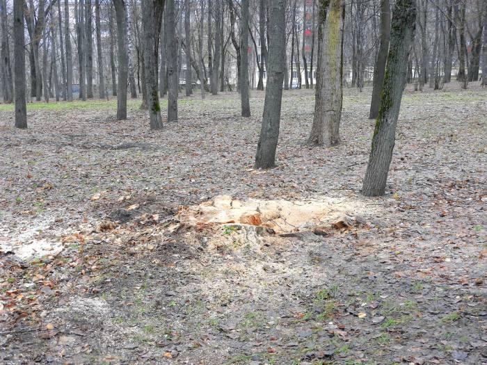 спиленное дерево в парке