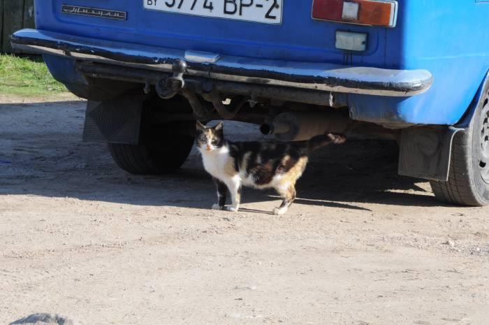 На свободе кошки способны приносить потомство несколько раз в год. Фото Анастасии Вереск