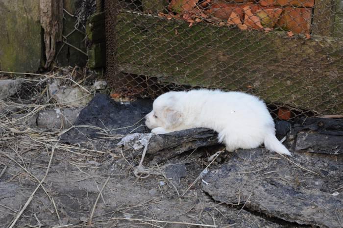 Щенкам и котятам приходится тяжелее всего. Фото Анастасии Вереск