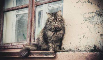 Бездомные животные нуждаются в нашей помощи. Фото Анастасии Вереск