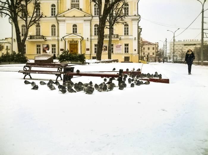 ратуша, голуби, зима