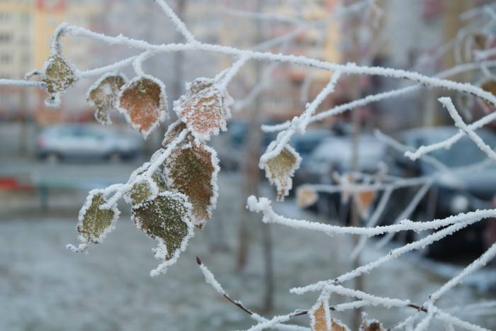 Зима может быть не только жестокой, но и красивой. Фото Анастасии Вереск