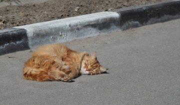Чем больше будет стерилизованных животных, тем меньше бродяжек пополнит улицы города. Фото Анастасии Вереск