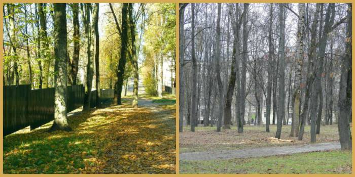 collage-park