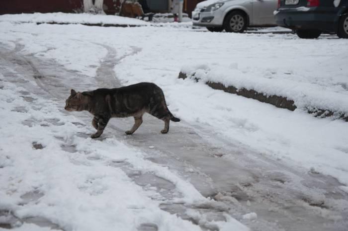 Впереди зима - самое тяжелое время для бездомных животных. Фото Анастасии Вереск