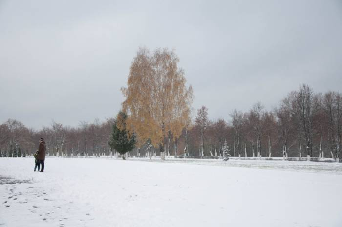 На белом зимнем ковре желтые деревья выделяются яркими пятнами. Фото Анастасии Вереск