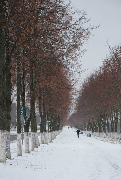 Красота осеннего парка в зимнем убранстве. Фото Анастасии Вереск