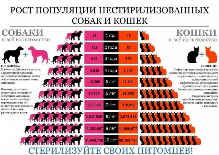 О размножении бездомных животных популярным языком. Источник koshkidarom.ru