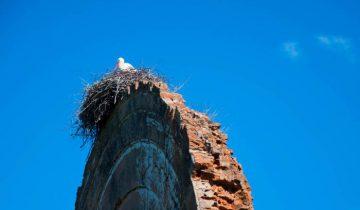 Аисты на руинах в Холопеничах. Фото Анастасии Вереск