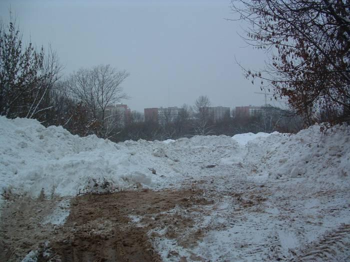Овраг на проспекте Черняховского. Фото Дарьи Максименко
