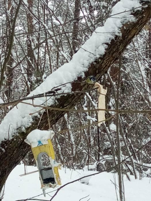 витебск, синички, лес, кормушки, зима