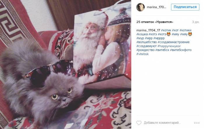 У этого кота праздничные впечатления написаны прямо на морде