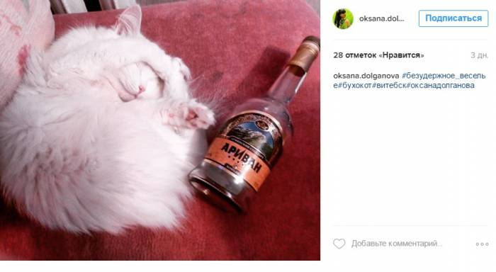 Кот-алкоголик - горе в семье