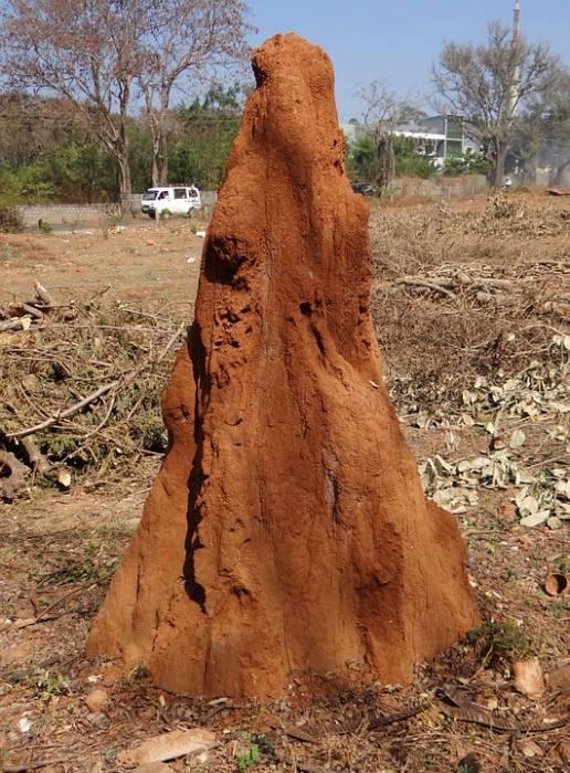 termite-hill