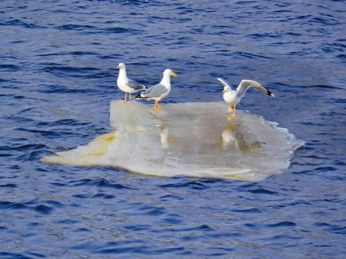 Практически полностью ото льда освободилась Западная двина. Фото Светланы Васильевой