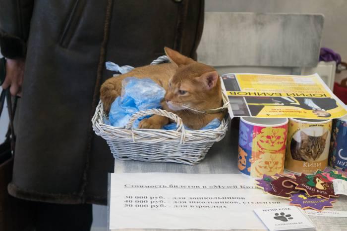 В минском музее кота на проспекте Дзержинского, 11. Фото Анастасии Вереск