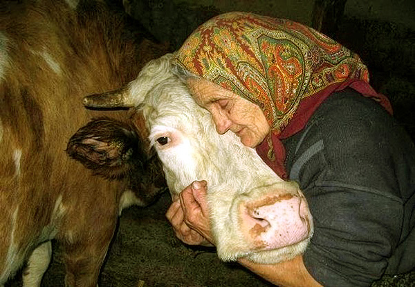 Агафья считается покровительницей домашнего скота. Фото strizhata.org
