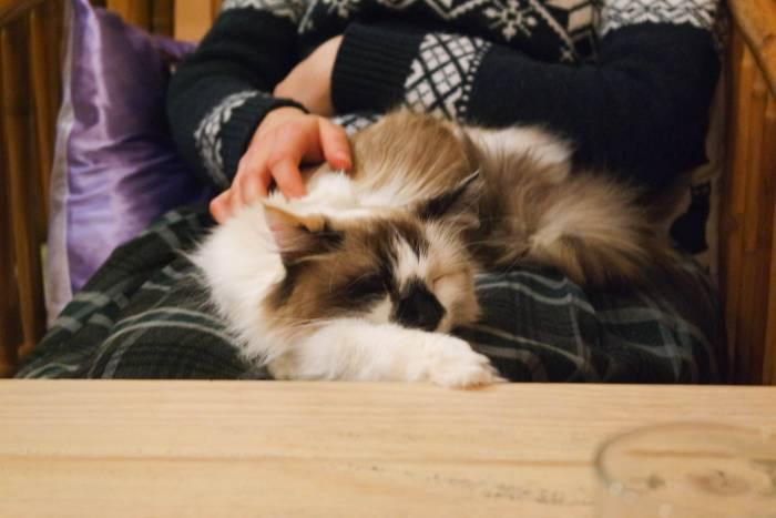 Вам повезло, вас выбрала кошка! Фото Анастасии Вереск
