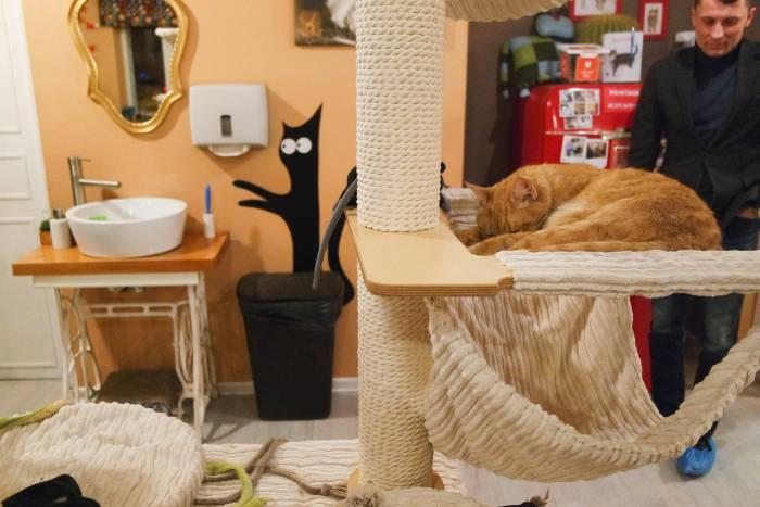 Некоторые кошки мирно дремлют на лежанках. Фото Анастасии Вереск