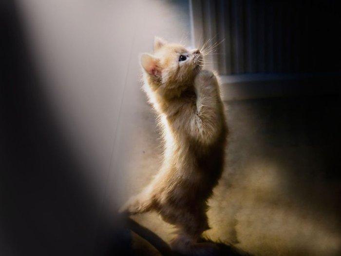Традиция просить о заступничестве за домашних животных сохранилась. Фото kittycapers.tv