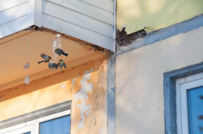 С наступлением весны птицы смогут надеяться не только на кормушки. Фото Анастасии Вереск