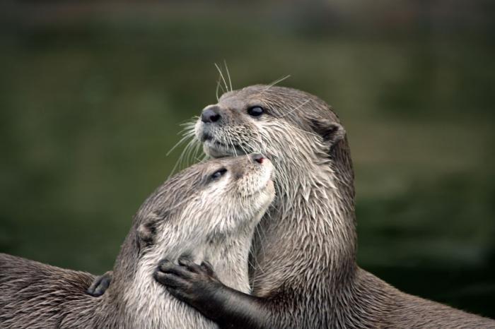 Любите друг друга :) Фото: Аля Покровская