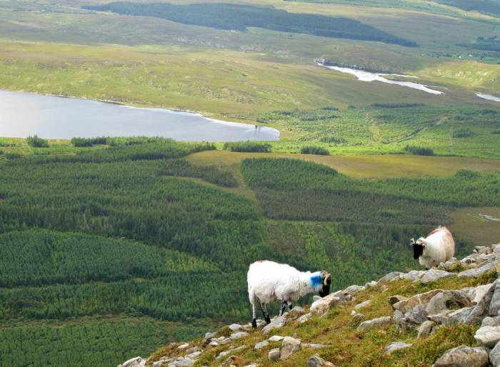 Типично ирландский пейзаж. Фото из архива Марии