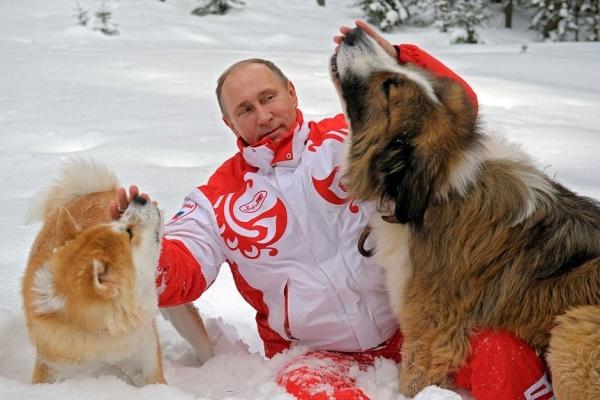 Путин славится своей любовью к животным. Фото: novo24.ru