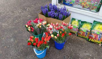 Тюльпаня расходятся на ура! Фото: Аля Покровская