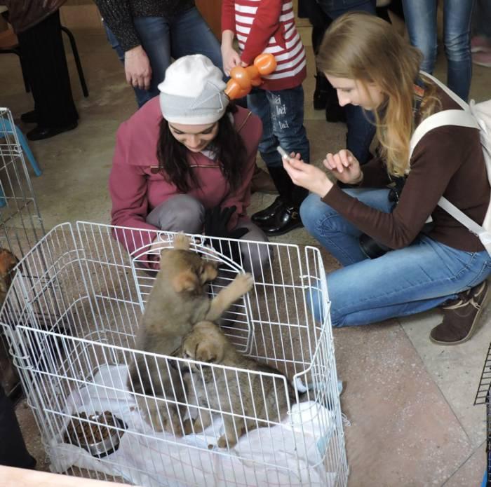 бездомные животные, акция. ВЗЭП