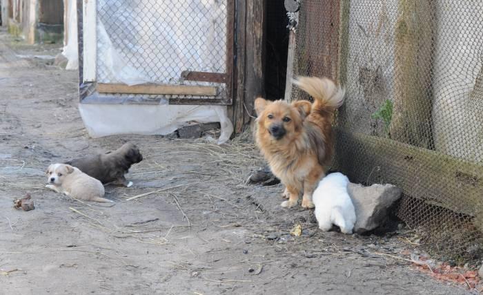 Инстинкт размножения может заставить собаку убежать из дома. Фото Анастасии Вереск
