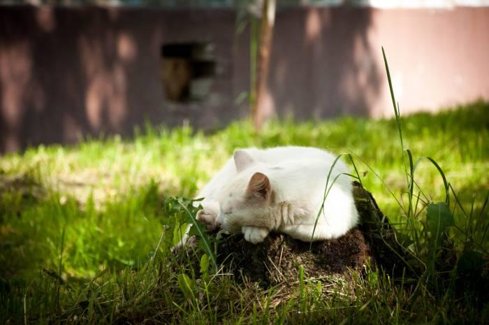 Кошки предпочитают выбирать укромные места. Фото Анастасии Вереск