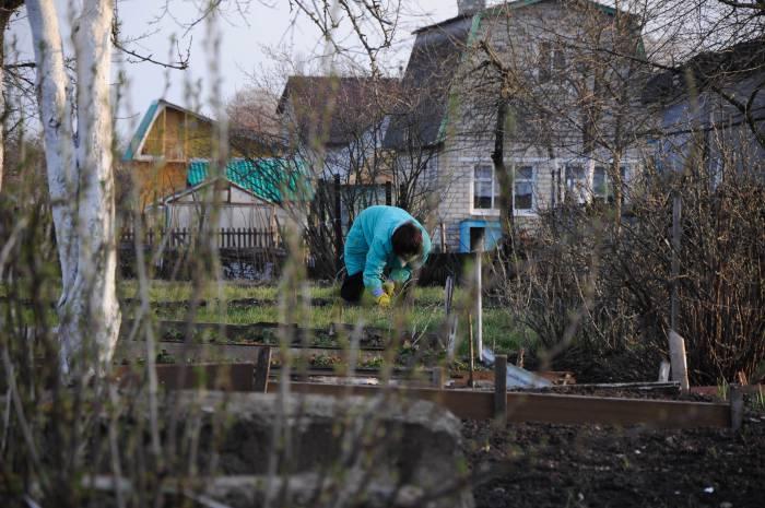 весна, витебск, дачи, огород
