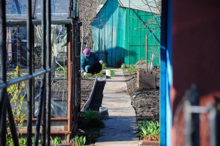 весна, дачники, приметы, огород