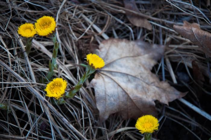 Нашлась весна! Фото Анастасии Вереск