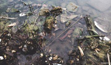 Мина, обнаруженная в пруду в одном из российских поселений. Фото spzavidovo.ru