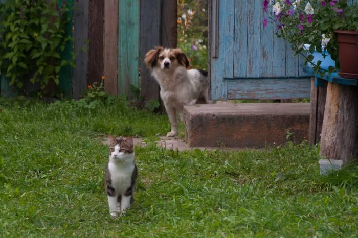 Не стоит оставлять собаку на свободном выгуле. Фото Анастасии Вереск