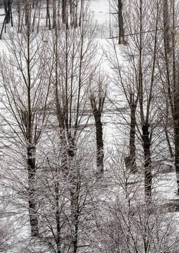 Весна в Витебске будет переменчивой, но морозов не ожидается