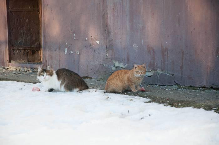 Обратите внимание, кто подкармливает кошек в вашем дворе, этот человек может вам помочь в ваших поисках. Фото Анастасии Вереск