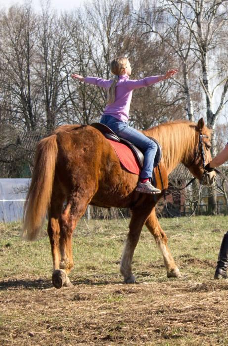 Лошадь ребенок