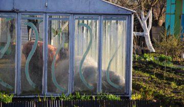 Скоро: на всех огородах страны. Фото Анастасии Вереск