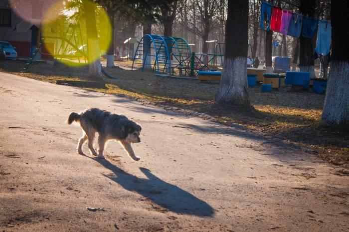 С проблемой бездомных животных сталкиваются в каждом городе. Фото Анастасии Вереск