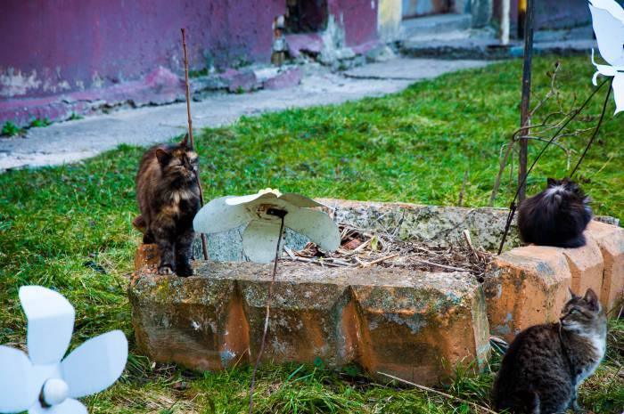 """Креатив """"из мусора"""" может украсить двор. Фото Анастасии Вереск"""