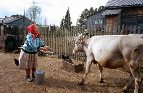 На Юрьев день принято выгонять скот на пастбища. Фото karelian.ru