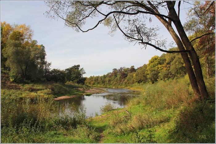 Лесопарковая зона возле реки Лучеса. Фото fotokto.ru