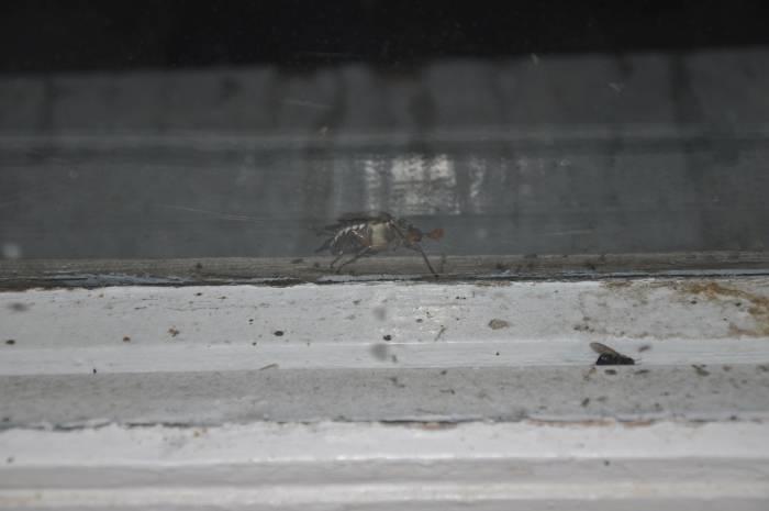 Скоро и на вашем окне. Фото Анастасии Вереск