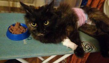 Кошка Кнопа. Фото предоставлено Еленой