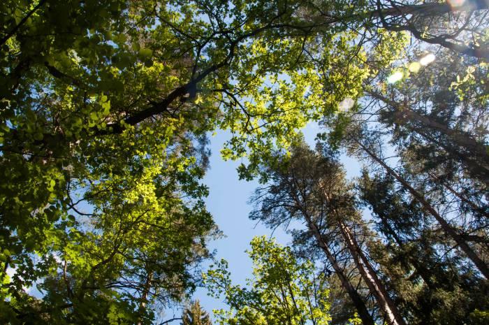 Летчанская природа. Фото Анастасии Вереск